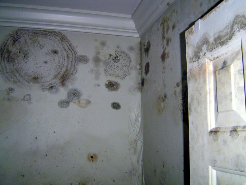 Mold on Bathroom Ceiling - Buzzle Web Portal: Intelligent Life on
