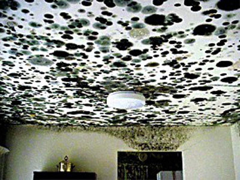 Black Mold Ceiling Ceiling Systems